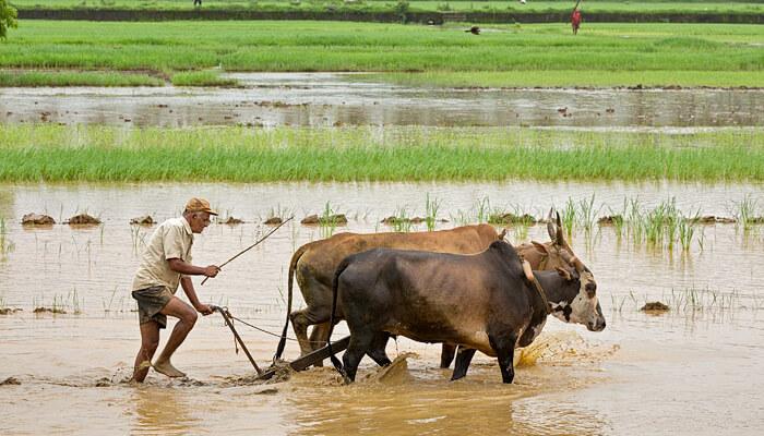 Farmer Ploughing
