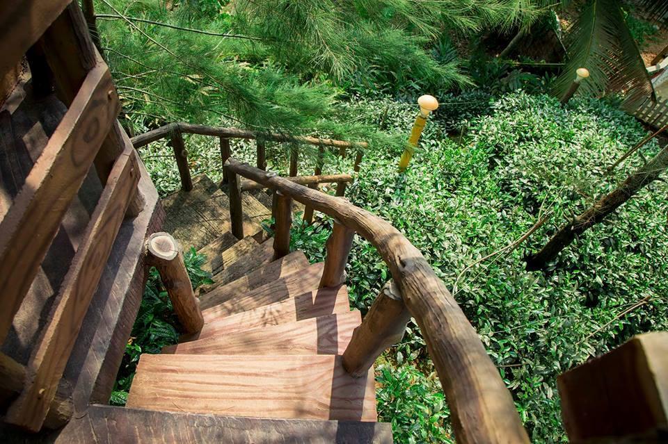 Fascinating Tea Garden at Mango Meadows Agricultural theme Park!
